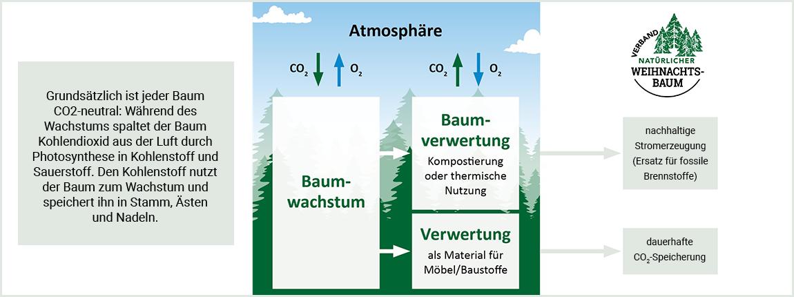 Weihnachtsbaum & Klima
