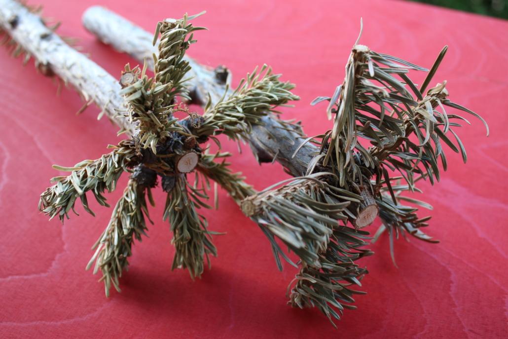 Die dünnen Ästchen an der Christbaumspitze müssen entrindet und von den Nadeln befreit werden.