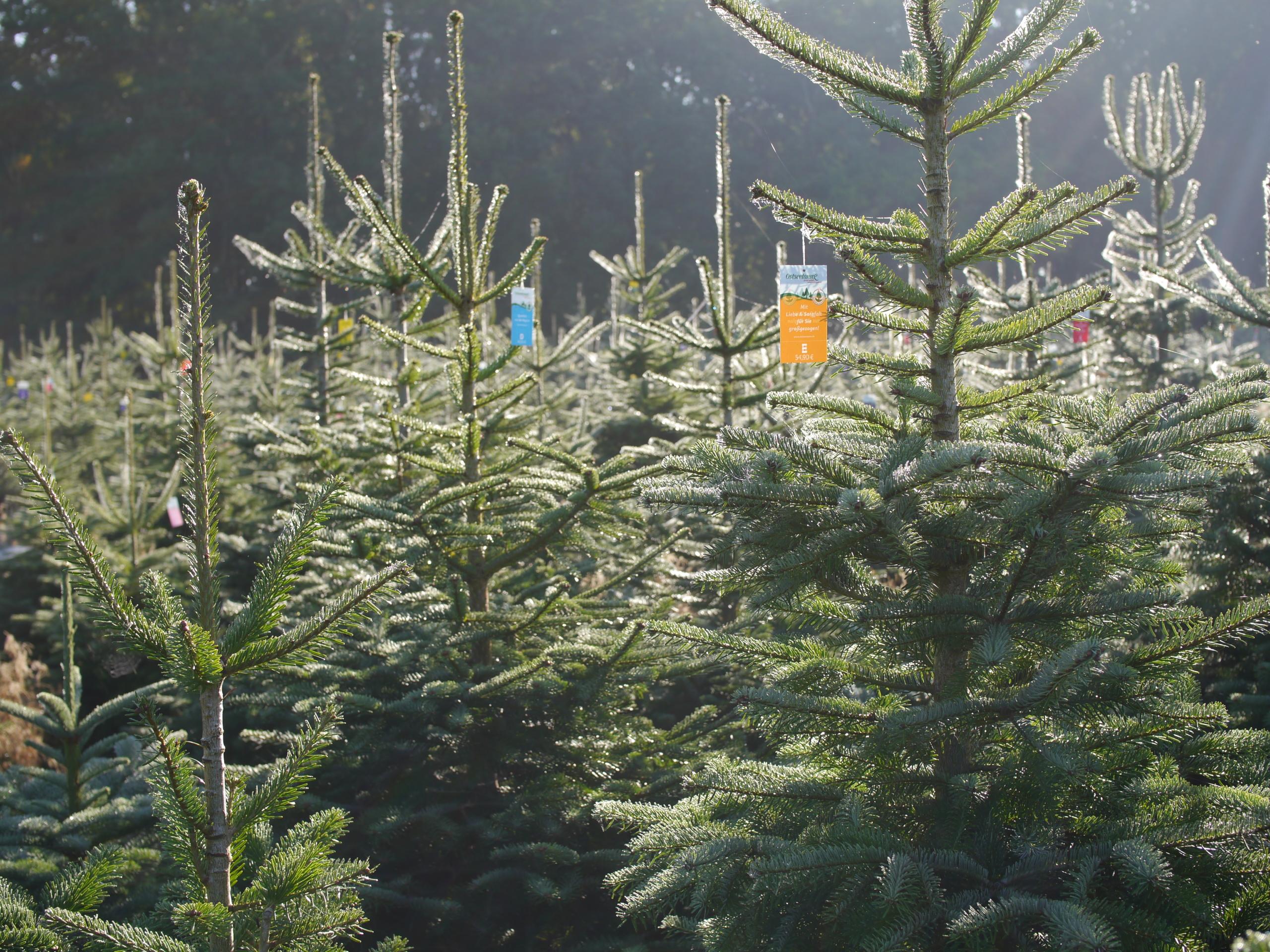 Weihnachtsbaum Preise