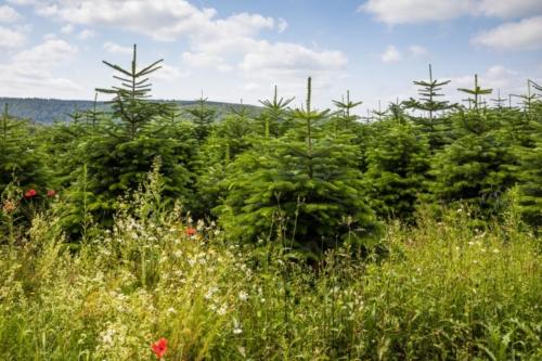 Naturbaum Sommer VNWB Buecker 03