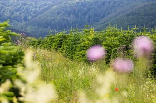 Naturbaum Sommer VNWB Buecker 10